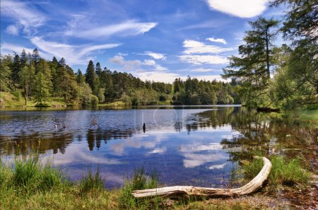 Photo for A view of Tarn Hows, a small lake in the English Lake District surrounded by woodland - Royalty Free Image