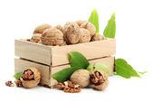 Vlašské ořechy se zelenými listy v woooden bednu, izolované na bílém
