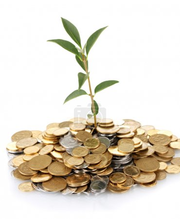 Plant growing out of gold and silver coins isolated on white background cl