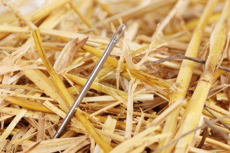 Photo for Needle in a haystack close-up - Royalty Free Image