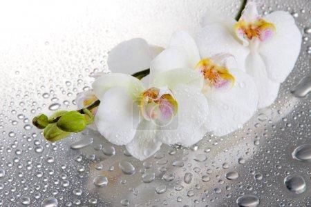 Foto de Hermosas orquídeas blancas con gotas - Imagen libre de derechos