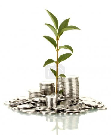 Photo for Plant growing out of silver coins isolated on white - Royalty Free Image
