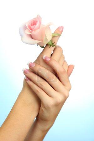 Photo pour Mains de la belle femme à la rose, sur fond bleu - image libre de droit