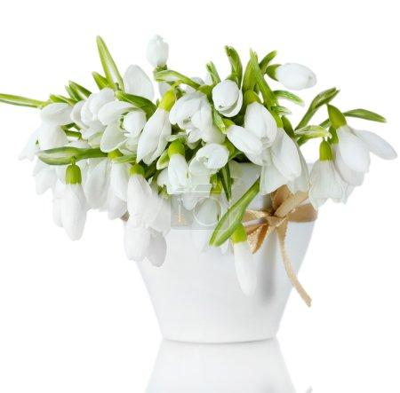 Photo pour Beau bouquet de gouttes de neige en vase avec arc isolé sur blanc - image libre de droit