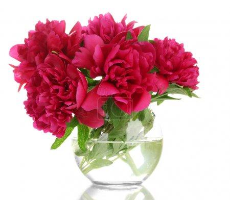 Photo pour Belles pivoines roses dans un vase en verre isolé sur blanc - image libre de droit