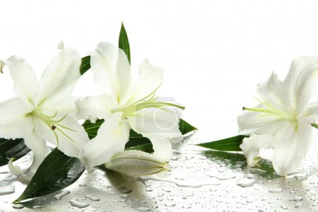 Beautiful lily, isolated on white