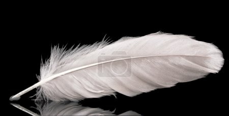 Photo pour Belle plume sur fond noir - image libre de droit