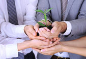 Business team holding together fresh green sprout closeup