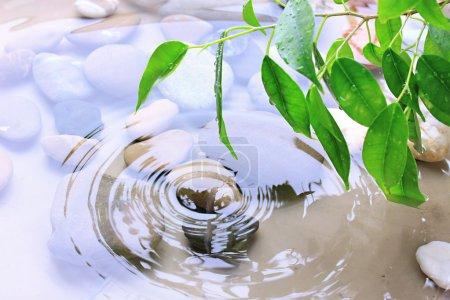 Photo pour Feuilles vertes avec des reflets dans l'eau - image libre de droit