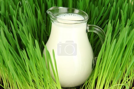 Photo for Glass pitcher of milk standing on grass close up - Royalty Free Image