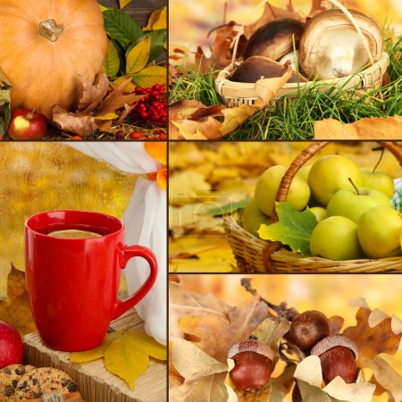 Collage of beautiful autumn
