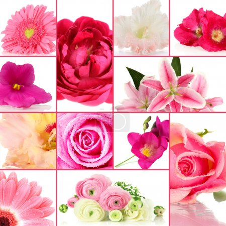 Collage of different beautiful flowers