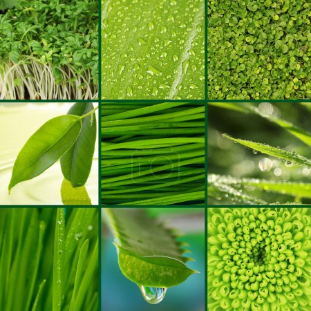 Photo for Collage of green grass and leaves. - Royalty Free Image