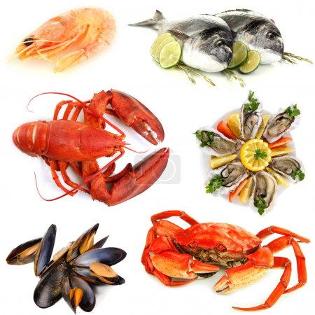 Photo for Seafood isolated on white - Royalty Free Image