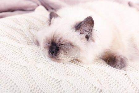 Beautiful cat sleeps on pillow in room