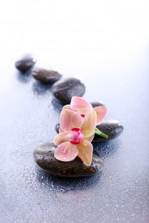 Photo for Composition with beautiful blooming orchid with water drops and spa stones, on light background - Royalty Free Image