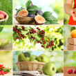 Collage of garden fruits and berries...