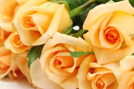 beautiful bouquet of roses close up