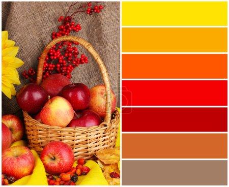 Photo pour Automne nature morte avec gros plan de pommes. palette de couleurs avec des échantillons gratuits - image libre de droit