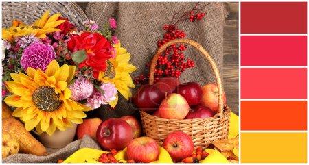 Photo pour Automne nature morte aux pommes. palette de couleurs avec des échantillons gratuits - image libre de droit