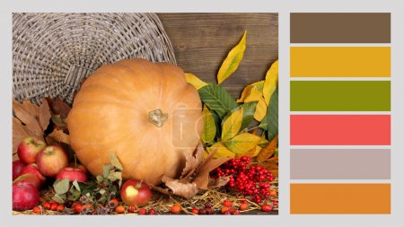 Autumn still life with pumpkin. Color palette with complimentary swatches
