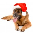 Funny cute dog in Christmas hat isolated on white...