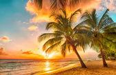 "Постер, картина, фотообои ""Барбадос"""
