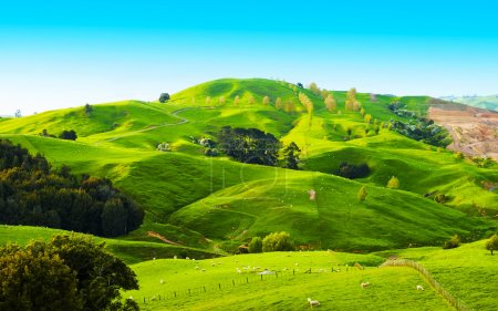 Photo for Beautiful green hills covered by grass and with many sheep on the pasture - Royalty Free Image