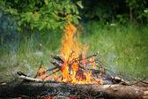 Bonfire campfire fire summer forest nature fire
