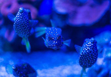 Rare fish underwater world