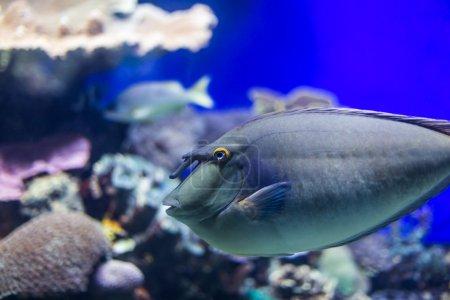 species of fish underwater world