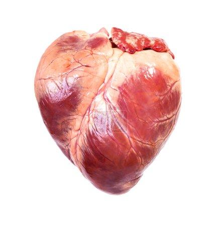 Photo pour Véritable cœur, fond blanc isolé - image libre de droit
