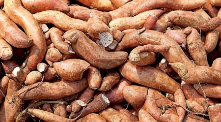 Nutrition sweet potato yam carbohydrate food backg...