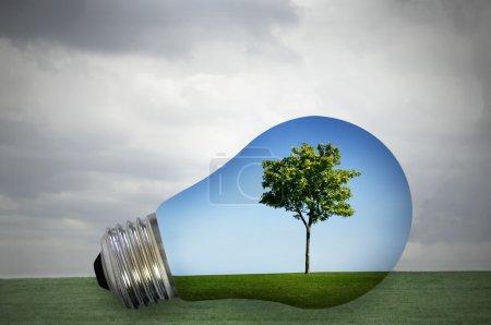 Photo pour Énergie écologique. arbre vert et ciel bleu à l'intérieur d'une ampoule avec gris tempête à l'extérieur - image libre de droit