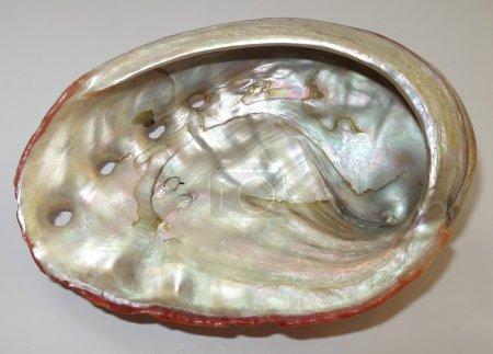 Interior shell