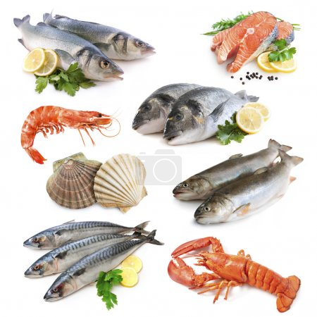 Photo for Fish collection isolated on the white background - Royalty Free Image
