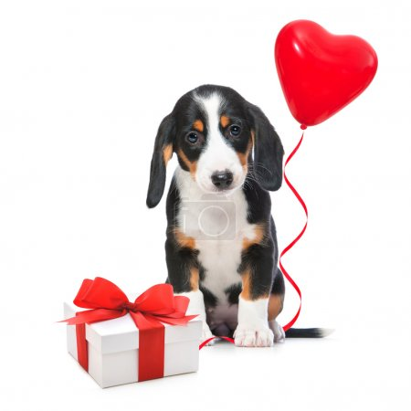 Photo for Party dog with gift boxes and balloons. Isolated on white background - Royalty Free Image