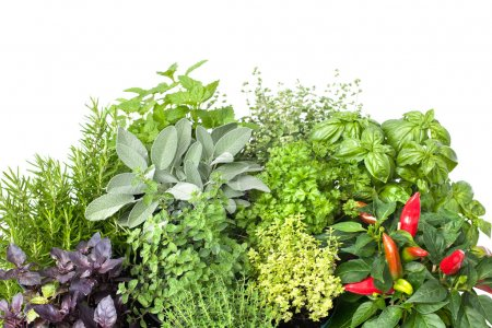 Fresh kitchen herbs