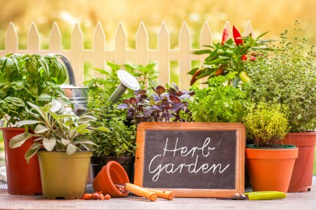Photo pour Jardin d'herbes aromatiques à la maison de jardin avec des pots d'herbes en face de la barrière - image libre de droit