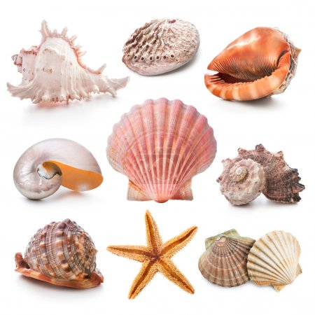 Photo for Seashell collection isolated on the white background - Royalty Free Image