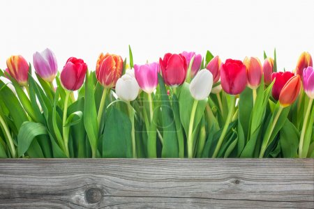 Photo for Spring tulips flowers with copy space for your message - Royalty Free Image