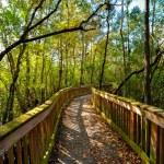 Wooden bridge in a forest, Kirby Storter Roadside ...