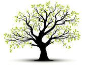 Vecor tree green foliage
