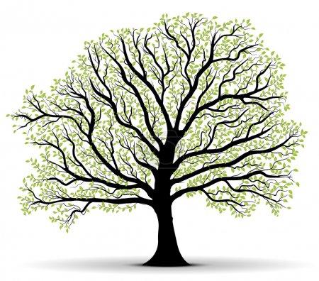 Illustration pour Grande silhouette vectorielle d'arbre avec feuillage vert sur fond blanc, tronc noir, beaucoup de feuilles - image libre de droit