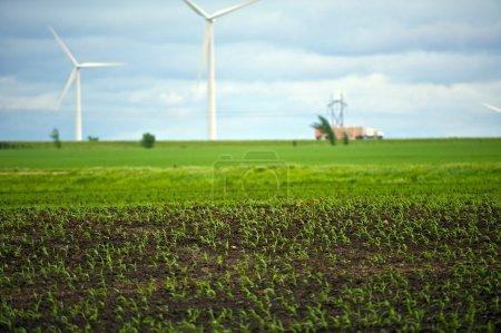 Photo pour Thème photo agricole - Ferme biologique avec éoliennes et autoroute en arrière-plan . - image libre de droit