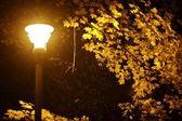 Fall Night in Park