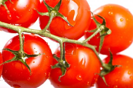 Photo for Fresh Red Tomato Fruits with Water Drops. Fresh and Healthy Vegetables. Tomatoes on Solid White Background. - Royalty Free Image