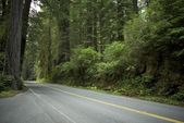 Road in Redwood Forest