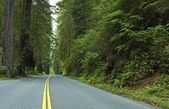 Deep Redwood Forest Road