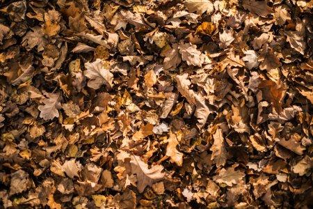 Photo pour Feuilles d'automne sèches Contexte. Automne Saison toile de fond . - image libre de droit